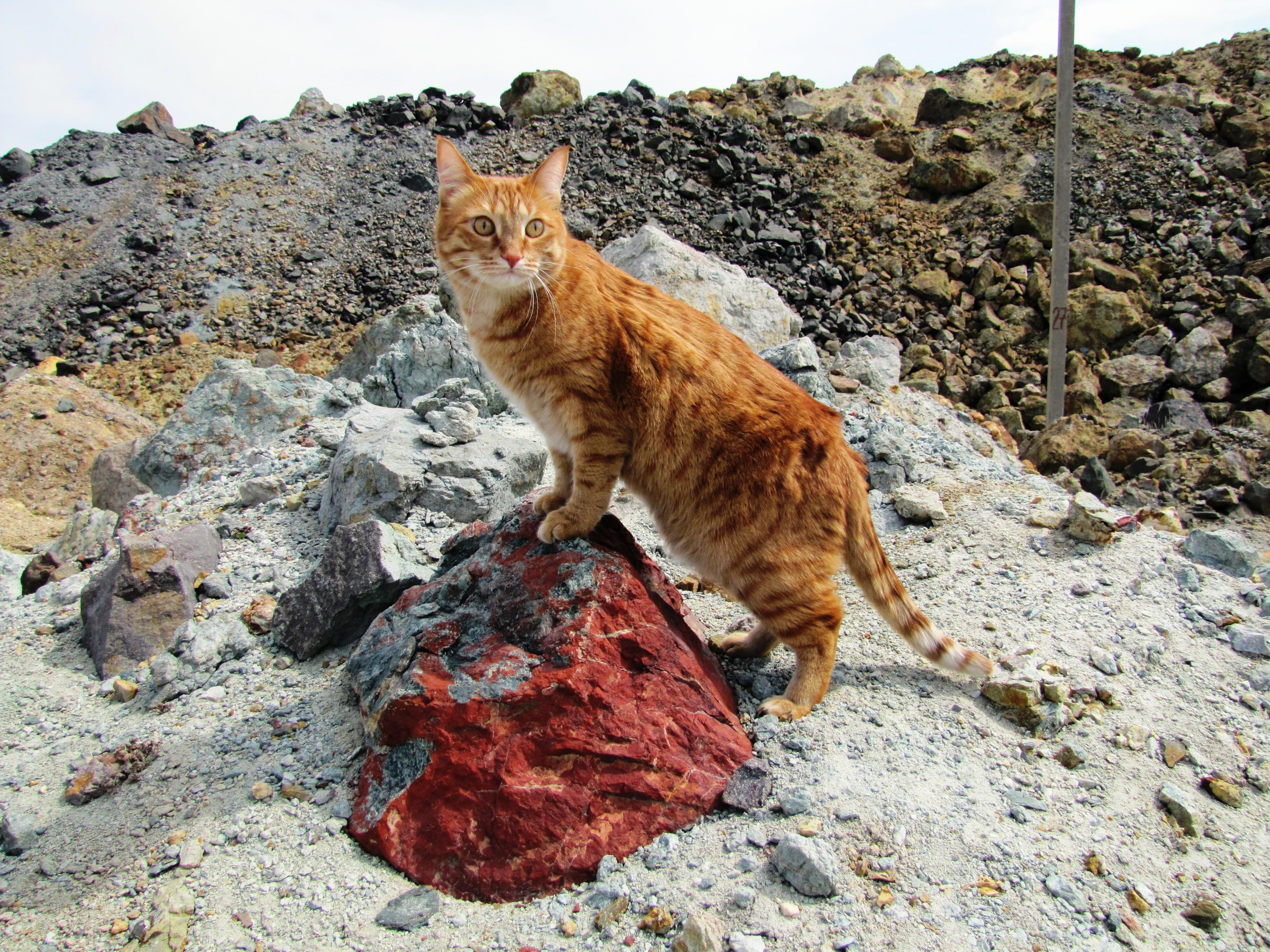 Наш главный геолог